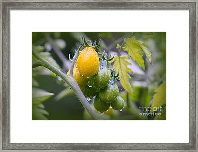 Fruits Of Our Labours Framed Print by Leone Lund