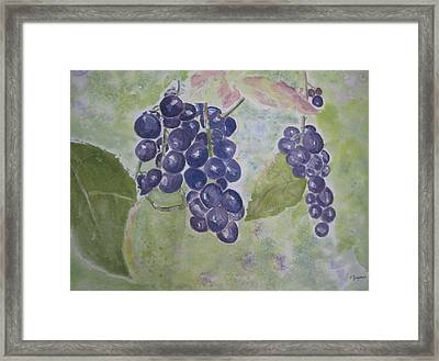 Fruits Of The Wine Framed Print