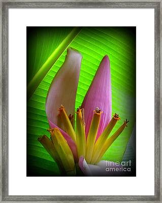 Fruits Ready Framed Print