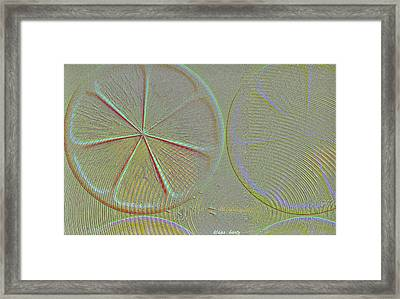 fruity Delicious Framed Print