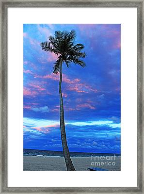Ft Lauderdale Palm Framed Print by Alison Tomich
