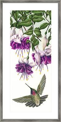 Fuchsia Beauty Framed Print by Pat Erickson