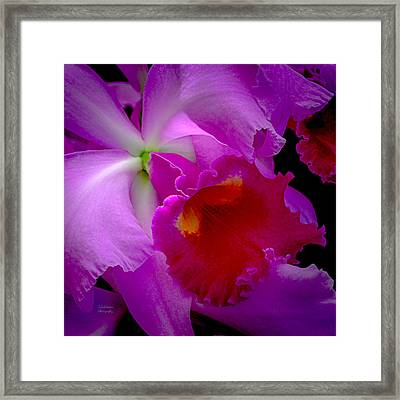Fuchsia Cattleya Orchid Squared Framed Print by Julie Palencia