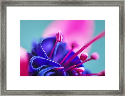 Fuchsia Detail Framed Print
