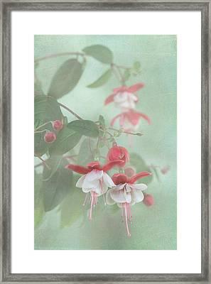 Fuchsia Dreams Framed Print
