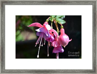 Framed Print featuring the photograph Fuchsia Flower by Scott Lyons