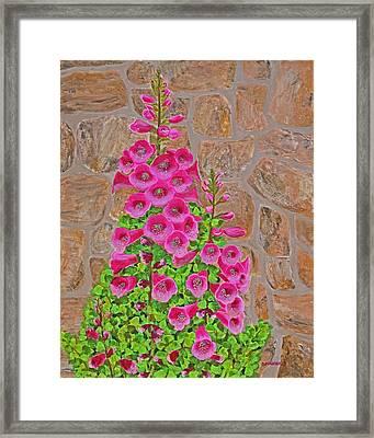 Fuchsia Profusion Framed Print