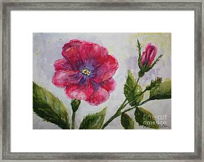 Fuchsia Rose And Bud Framed Print by Terri Maddin-Miller