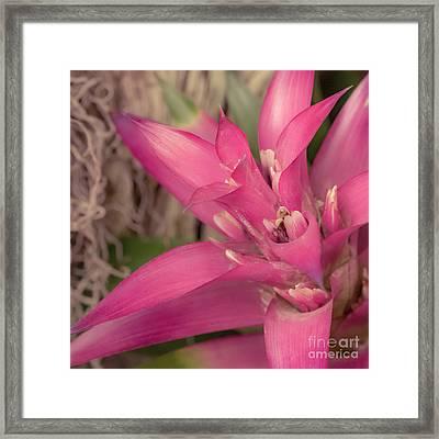 Fuchsia Tropics Framed Print