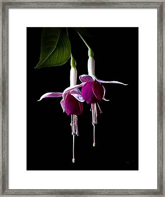 Framed Print featuring the photograph Fuchsias by Endre Balogh