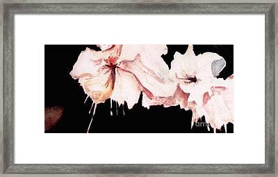 Fuchsias Framed Print