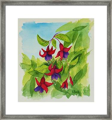 Fuchsias Framed Print by Katherine Young-Beck