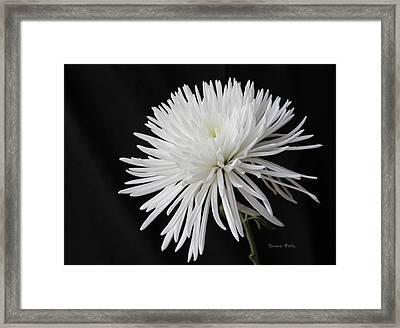 Fuji Mum Framed Print by Bonnie Willis