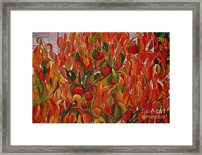 Fuyu Persimmon Tree Framed Print