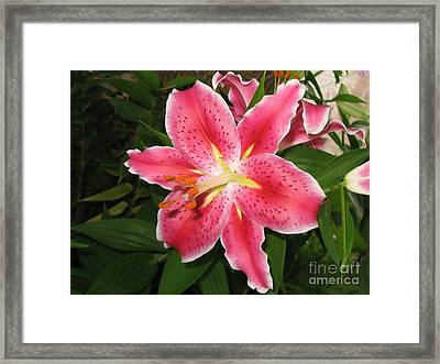 Framed Print featuring the photograph Fukuoka Lily by Carol Sweetwood