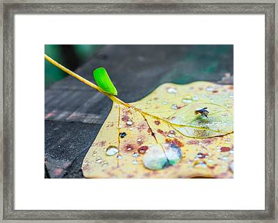 Framed Print featuring the photograph Fulgoroidea On A Leaf by Rob Sellers