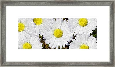 Full Bloom Framed Print by Jon Neidert