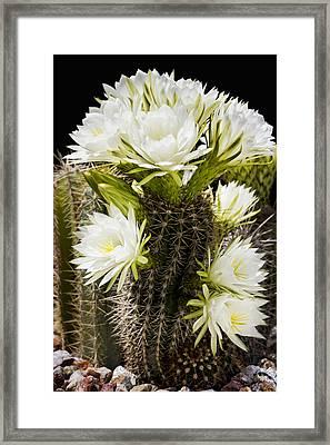 Full Bloom Framed Print by Kelley King