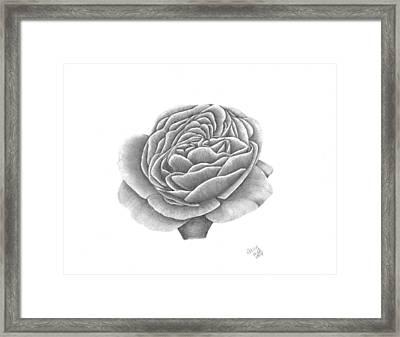 Full Bloom Framed Print by Patricia Hiltz