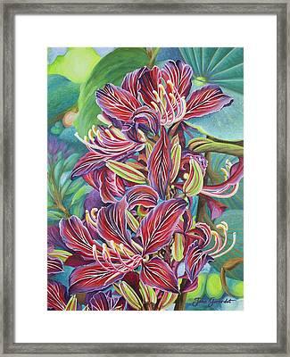 Full Blossom Orchid Tree Framed Print