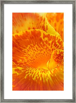 Full Color Canna Framed Print