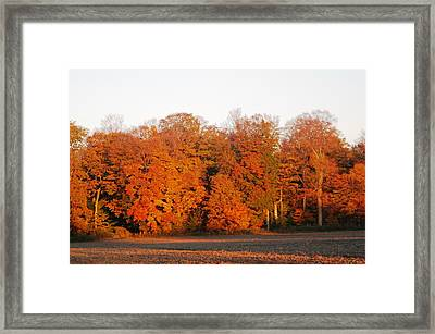 Full Colour Morning Framed Print by Sheila Byers