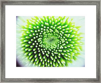 Full Frame Shot Of Beautiful Flower Framed Print by Alyssa Stasiukonis / Eyeem