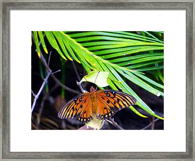 Full Glory Framed Print