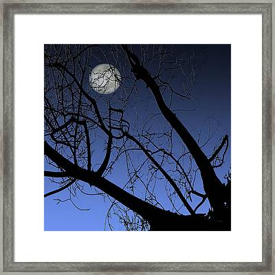 Full Moon And Black Winter Tree Framed Print by Ben and Raisa Gertsberg