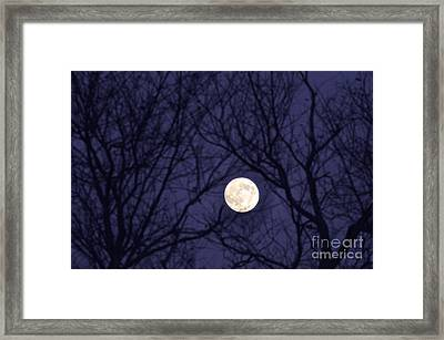 Full Moon Bare Branches Framed Print by Thomas R Fletcher