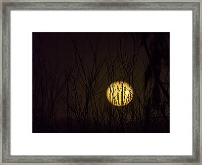 Full Moon Behind The Trees Framed Print by Angela A Stanton