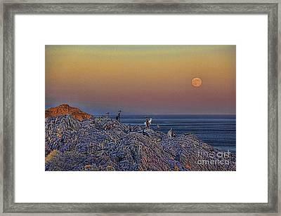 Full Moon Gathering Of Capricorn Framed Print