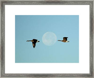 Full Moon Geese Framed Print