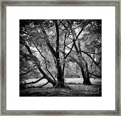 Full Moon Maple Trees  Framed Print by Tim Gainey