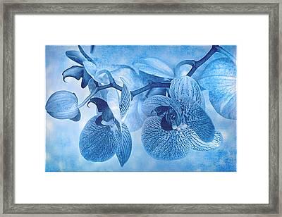 Full Moon Orchids Framed Print by Douglas MooreZart