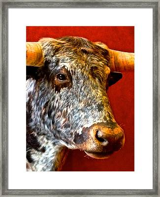 Full Of Bull Framed Print by Dee Dee  Whittle