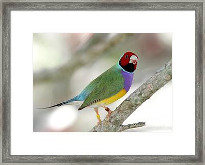 Full Of Color Framed Print by Sabrina L Ryan