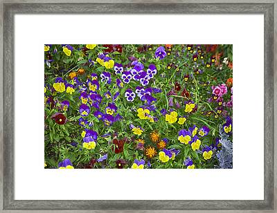 Full Of Flowers Framed Print