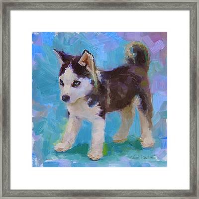 Alaskan Husky Sled Dog Puppy Framed Print by Karen Whitworth