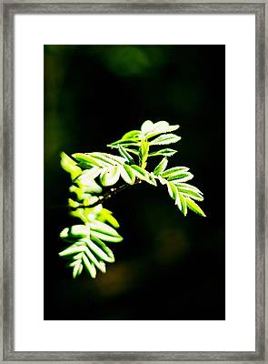 Full Of Life 13  Framed Print by Yevgeni Kacnelson