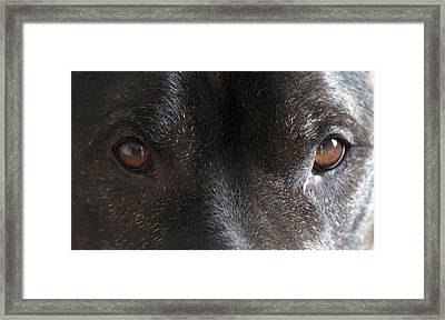 Full Of Soul Framed Print