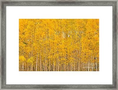 Fullness Of Gold Framed Print