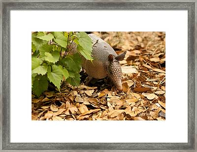 Fully Armored Framed Print