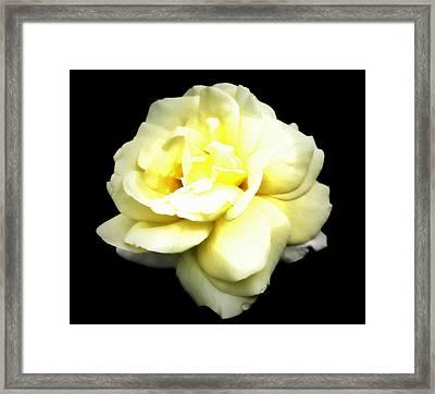 Fully Bloomed Framed Print by Cathie Tyler
