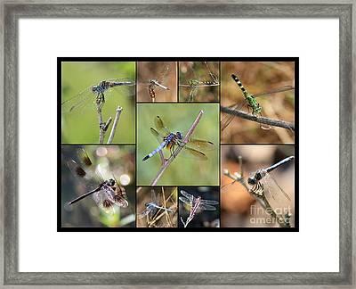 Fun Dragonfly Collage Framed Print by Carol Groenen