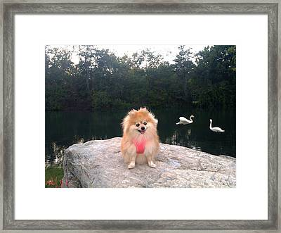 Fun In The Park Framed Print by Michael Rucker