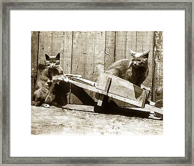 Framed Print featuring the photograph Fun With Cats Henry King Nourse Photographer Circa 1900 by California Views Mr Pat Hathaway Archives
