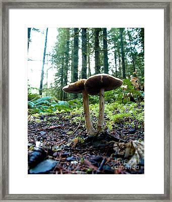 Fun With Fungi Framed Print by Cari Gesch
