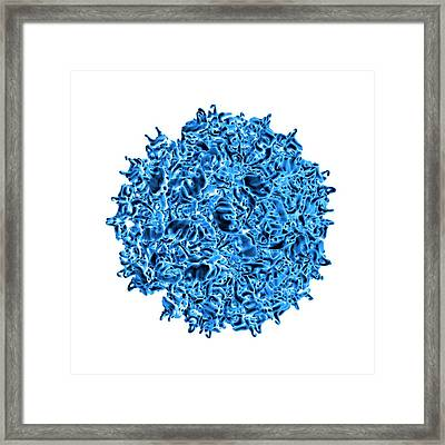 Fungal Partitivirus Framed Print