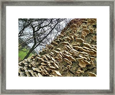 Funghi Framed Print by James Bradley